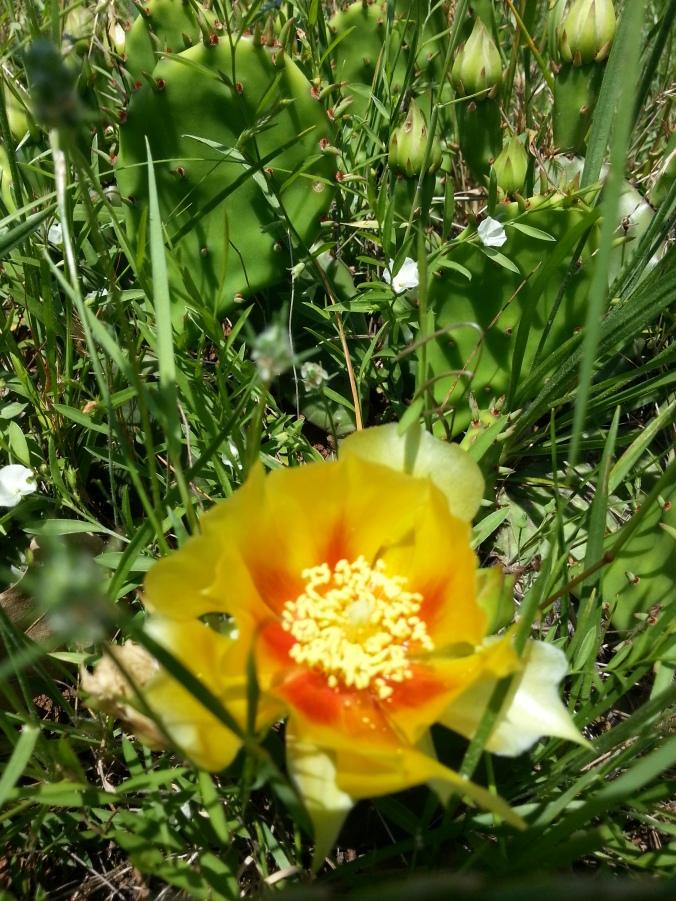 quiet-flower